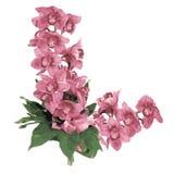 Flor orhids Stock Afbeeldingen