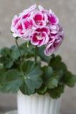 Flor ornamental Imágenes de archivo libres de regalías