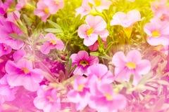 Flor ornamental Imagen de archivo libre de regalías
