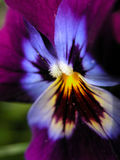 Flor ou borboleta? Imagem de Stock