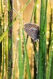 Flor-påskyndad fjäril Royaltyfri Fotografi