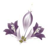 Flor púrpura libre illustration