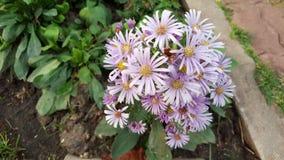 Flor púrpura Imagen de archivo