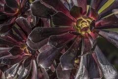 Flor púrpura 2 Foto de archivo libre de regalías
