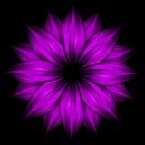 Flor púrpura abstracta en fondo negro stock de ilustración
