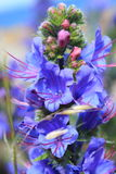 Flor púrpura azul Foto de archivo libre de regalías