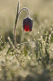 Flor Púrpura-blanca Imágenes de archivo libres de regalías