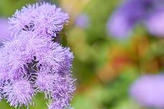 Flor púrpura con el bokeh colorido foto de archivo