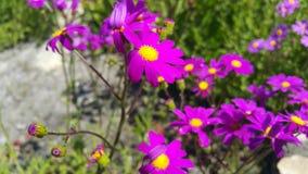 Flor púrpura con el centro amarillo Fotos de archivo