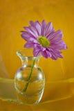 Flor púrpura con el fondo anaranjado y amarillo fotos de archivo libres de regalías