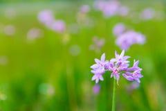 Flor púrpura con el fondo verde Imagenes de archivo