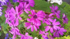Flor púrpura con el olor hermoso fotos de archivo libres de regalías