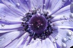 Flor púrpura con las burbujas Foto de archivo libre de regalías