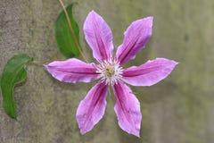 Flor púrpura con las hojas verdes Fotografía de archivo libre de regalías