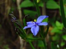 Flor púrpura de la bandera imágenes de archivo libres de regalías