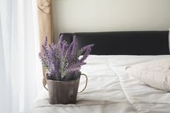 Flor púrpura de la lavanda en cama Foto de archivo