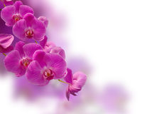 Flor púrpura de la orquídea Foto de archivo