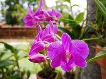 Flor púrpura de la orquídea imagenes de archivo