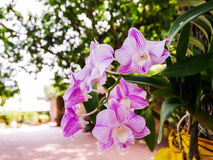 Flor púrpura de la orquídea fotografía de archivo