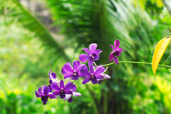 Flor púrpura de la orquídea Imagen de archivo