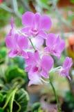 Flor púrpura de la orquídea del primer, orquídea del Dendrobium fotos de archivo