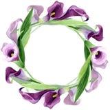 Flor púrpura de las calas de la acuarela Flor botánica floral Cuadrado del ornamento de la frontera del capítulo stock de ilustración