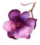 Flor púrpura del árbol de la magnolia o de tulipán stock de ilustración