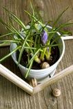 Flor púrpura del azafrán Imagen de archivo libre de regalías
