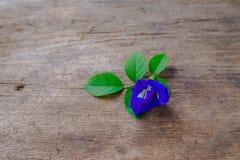 Flor púrpura del cactus en la madera vieja Fotografía de archivo libre de regalías