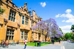 Flor púrpura del Jacaranda hermoso que florece cerca del edificio histórico en Sydney University en la estación de primavera imágenes de archivo libres de regalías