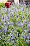Flor púrpura en campo Imágenes de archivo libres de regalías