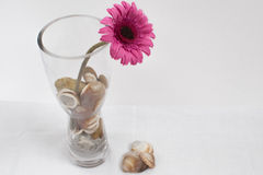 Flor púrpura en el florero de cristal Fotos de archivo