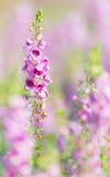 Flor púrpura en el jardín imagenes de archivo