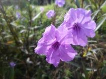 Flor púrpura en jardín Foto de archivo libre de regalías
