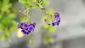 Flor púrpura en su árbol Foto de archivo