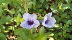 Flor púrpura en un jardín foto de archivo