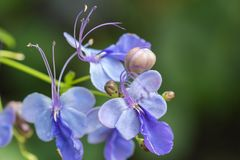 Flor púrpura floreciente colorida Foto de archivo