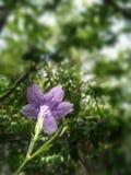 Flor púrpura floreciente en jardín del verano fotos de archivo