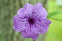 Flor púrpura grande fotografía de archivo