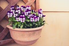 Flor púrpura hermosa (efecto procesado imagen filtrado del vintage Fotografía de archivo libre de regalías