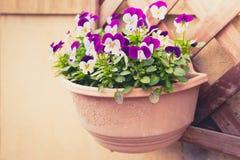 Flor púrpura hermosa (efecto procesado imagen filtrado del vintage Imagen de archivo