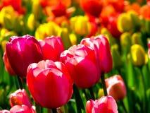 Flor púrpura hermosa en el día soleado - detalle en la flor imagen de archivo libre de regalías