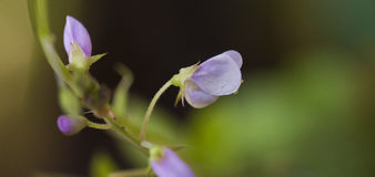 Flor púrpura micro hermosa y extravagante Imagen de archivo libre de regalías
