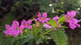 Flor púrpura nativa filipina fotografía de archivo libre de regalías