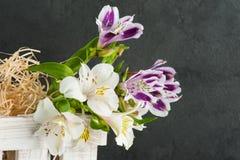 Flor púrpura y amarilla del lirio en la caja de madera blanca Fotografía de archivo