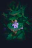 flor púrpura y hoja verde Imagenes de archivo