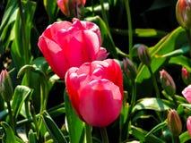 Flor p?rpura hermosa en el d?a soleado - detalle en la flor imagen de archivo libre de regalías
