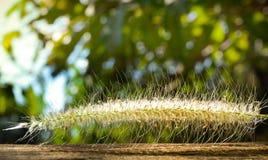 A flor pôs sobre a madeira no fundo da natureza (a flor do close-up) Imagens de Stock Royalty Free