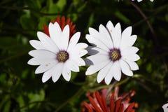 Flor para arriba 2 cercanos Fotos de archivo