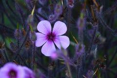 Flor para arriba 3 cercanos Fotografía de archivo